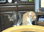じょう太郎&ちーこ「何々!?」
